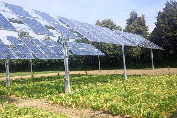 Lee más sobre el artículo Sinergias tecnoecológicas: el potencial de las instalaciones fotovoltaicas es mayor sobre cultivos