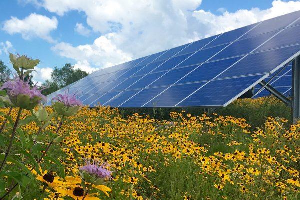 Lee más sobre el artículo Sinergias tecnoecológicas: los parques solares benefician a la biodiversidad al recrear las condiciones del suelo preindustrial