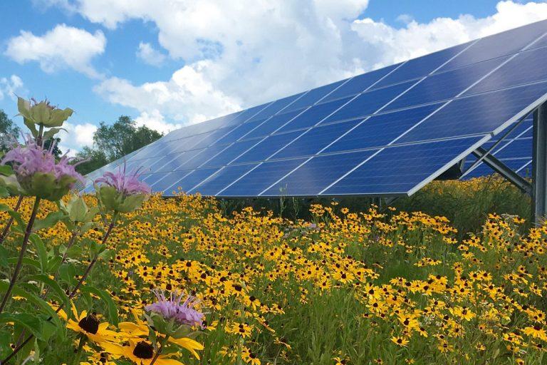 Sinergias tecnoecológicas: los parques solares benefician a la biodiversidad al recrear las condiciones del suelo preindustrial