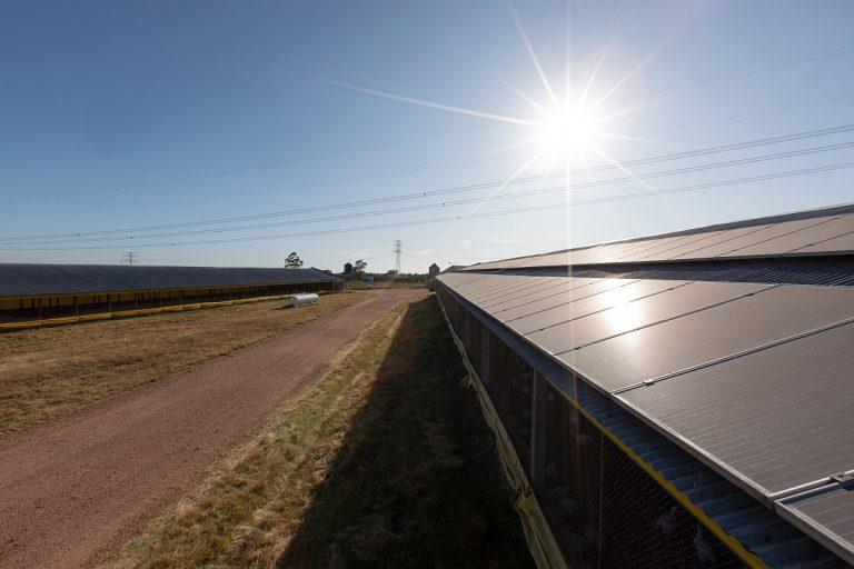 Granja Manzi se suma a la energía solar fotovoltaica de la mano de SES Latam